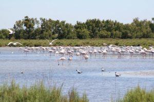 water-marsh-bird-shore-lake-summer-919484-pxhere.com