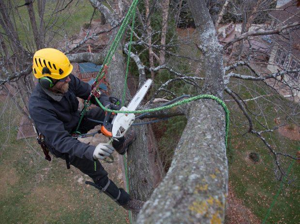 Les principales recommandations avant de procéder à un élagage d'arbre